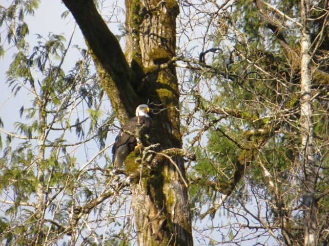 Bald Eagle Float Trip with Events & Adventures